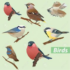 Buy Set of Birds by on GraphicRiver. Set of birds – tit, bullfinch, sparrow, crossbill. This image is a vector illustration and can be scaled to any size . Cartoon Birds, Cartoon Art, Bullfinch, Bird Drawings, Vintage Birds, Stock Foto, Wild Birds, Vector Art, Illustration