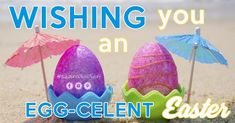 We hope you and your friends and family are having a hopping good time this Easter! don't forget to have an extra egg on us! Happy Easter, Easter Bunny, Easter Eggs, Easter Holidays, Easter Baskets, Hibiscus, Bunnies, Forget, Chocolate