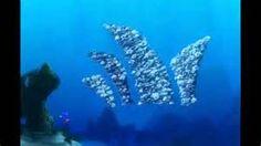 ... : Bill Finding Nemo , Gerald Finding Nemo , Barracuda Finding Nemo