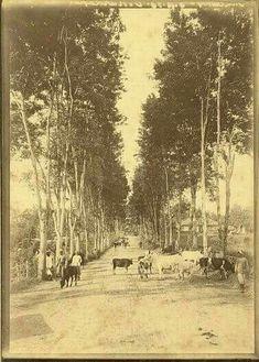 Straatbeeld, Malang, Java, Indonesië (1896)