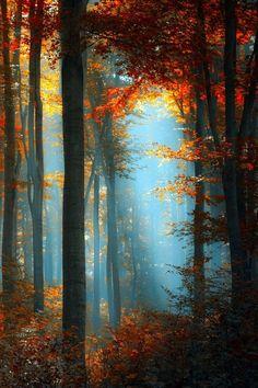 Stunning blue and orange forest.  #palette #devineinspiration #devinecolor