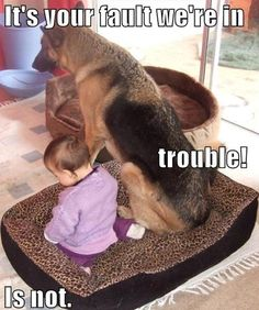 It's your fault you're in trouble dog toddler meditate