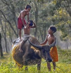 A fun image sharing community. Explore amazing art and photography and share your own visual inspiration! Kids Photography Boys, Big Animals, Beautiful Soul, Image Sharing, Figure Drawing, Animals Beautiful, My Images, Amazing Art, Philippines