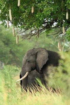 Liwonde National Park - Malawi