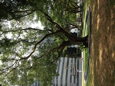 I like SMU green space :)