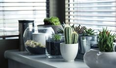 use all sorts of pots for your succulents and create clusters for high impact decorating