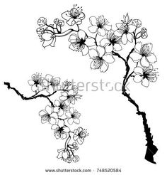 Hand drawn and outline Cherry branches with flowers, sakura vector illustration Flower Outline, Flower Art, Cherry Blossom Drawing, Clever Tattoos, Tattoo Schwarz, Cherry Flower, Chinese Flowers, Desenho Tattoo, Sakura