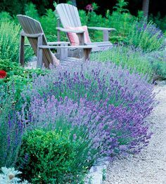 front yard - all mediterranean herbs - lavender, rosemary, etc.  gravel, circle for seating