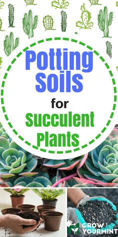 """Potting Soils For Succulent Plants Or As I Love To Call Them """"The First Step Toward Growing An Amazing Plants"""" Potting Soil For Succulents, Growing Succulents, Cacti And Succulents, Planting Succulents, Indoor Vegetable Gardening, Organic Gardening, Gardening Tips, Container Gardening, Succulent Rock Garden"""
