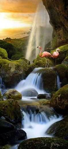 Flamingo Waterfalls