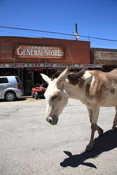 """Route 66. One of the descendants of a long line of wild burros that roam the streets in Oatman, Arizona, on old Rt. 66. """"The Fine Art Photography of Frank Romeo."""""""