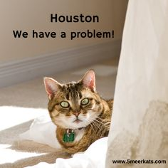 houston we have a problem. Houston, Cats, Funny, Animals, Gatos, Animales, Animaux, Funny Parenting, Animal