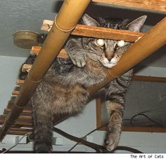 Great cat climbing ideas, I'll have to make something like this for Siti for when she becomes an indoor cat!
