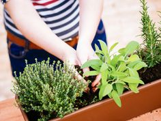 Balcony herb garden: plant and use herbs - Pflanzideen Aromatic Herbs, Medicinal Herbs, Container Herb Garden, Garden Plants, Garden Web, Balcony Herb Gardens, Balcony Gardening, Apartment Gardening, Outdoor Balcony