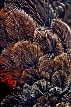Ostrich plume  www.facebook.com/loveswish