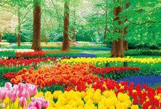 チューリップの季節ならキューケンホフ公園へ行ってみて、オランダ 旅行のおすすめ観光スポット。