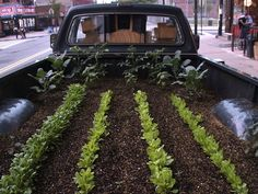 Truck Farm Phoenix- A Mobile Urban Agriculture Project by Good Food Allies (Natalie Morris) — Kickstarter