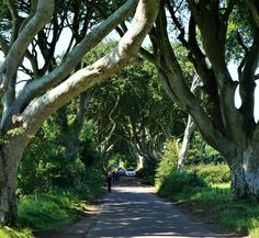 The Dark Hedges in Northern Ireland. Visit Dark Hedges known from Game of Thrones on your road trip in Northern Ireland. Read more on the blog! Destinationdaydreaming.dk