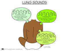 Lung Sounds Lung sounds, also referred to as respiratory sounds or breath sounds, can be auscultated across the anterior and posterior chest walls with a stethoscope. Adventitious lung sounds are referenced as crackles (rales), wheezes (rhonchi), stridor and pleural rubs as well as voiced sounds that include egophony, bronchophony and whispered pectoriloquy.