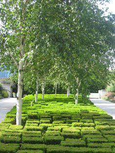 Foto: Birkenhain in Buchskuben - Frankreich, Paris - GEO-Reisecommunity Parc citroen