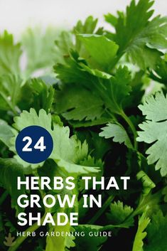 24 Herbs That Grow In Shade - Home for the Harvest - Grow a herb garden in low-light conditions, either outdoors or indoors blooming Perennials maintenance Perennials full sun ideas Herbal Plants, Medicinal Herbs, Small Herb Gardens, Outdoor Gardens, Gardening For Beginners, Gardening Tips, Hanging Herbs, Shade Perennials, Shade Plants