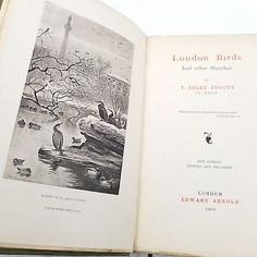 Rare Antique Book 1902 London Birds and Other Sketches by T. Digby Pigott