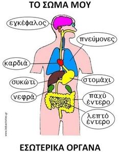 to swma mou-eswterika organa. Greek Phrases, Human Body Activities, Learn Greek, English Lessons For Kids, Greek Language, Greek Alphabet, Baby Learning, Body Systems, School Psychology