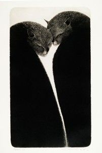 Black Cat Art, Black Cats, Cat Paintings, Illustration Art, Illustrations, All About Cats, Etchings, Beautiful Cats, Home Art