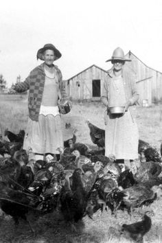 Olden Days Chicken & Turkey Feeding. This reminds me of my great aunt & grandmother.  Both lived on farms across the road from each other. Hardest working ladies I ever knew.