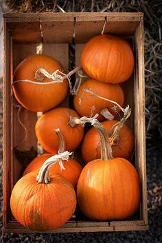 Crate of Pumpkins...