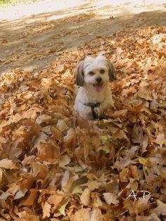Outono...branco !