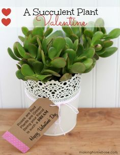 "Plant Valentine idea. so cute!  Change to ""being your student"" for a teacher gift?"