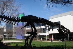 google campus dinosaur...when I saw him he several pink flamingos on him!