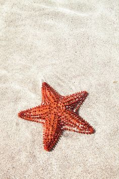 Starfish Under Water by Matteo Colombo Starfish Under Water by Matteo Colombo <br> Starfish Drawing, Starfish Art, Ocean Wallpaper, Iphone Wallpaper, Photo Wall Collage, Picture Wall, Fish Background, Water Artists, Peach Aesthetic