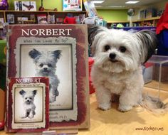 We are so excited here at Taunton Public Library! Norbert is coming to visit on March 12th at 10:00!! He's a 3-pound registered therapy dog and the star of Norbert: What Can Little Me Do?