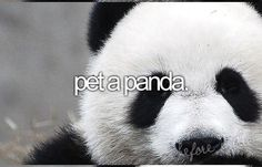 Before I die Bucket List bucket-list Pet a panda
