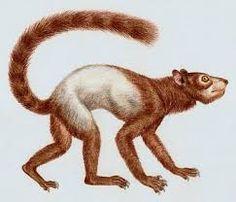 prehistoric Rodent - חיפוש ב-Google