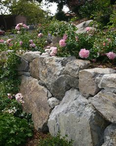 Rugged Boulder wall topped with pink carpet roses...could do without the roses but love the wall
