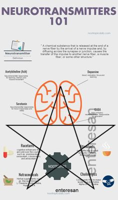 Nootropics and Neurotransmitters 101 an infographic. Get a better understanding of nootropics by lea Brain Anatomy And Function, Getting Sober, Nerve Fiber, Muscle Definition, Neurotransmitters, Nervous System, Infographics, Science, Mood