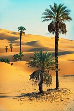 "janetmillslove: "" Moroccan Sahara Dese moment love """