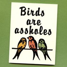 BIRDS ARE ASSHOLES  Mature & Funny Greeting Card  by seasandpeas