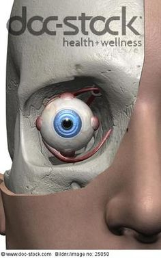 front view of human eye - Google Search