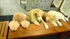 perros rezan antes de comer - YouTube