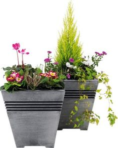 Milano Square Planter - Pack of 2. | Homebase  sc 1 st  Pinterest & Rowlinson Marberry Square Planter. For lavender outside front door ...