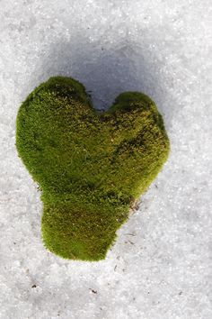 """This heart-shaped piece of moss is for all of you who feel as caught as I do in late February/early March between the """"heart holiday"""" and the """"green holiday"""" -- St. Patrick's Day. Regarding the latter, did you know that shamrocks can't be four-leaf clovers? Here's why: http://landscaping.about.com/cs/lawns/a/clover_lawns.htm"""