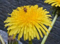 Nectar oogsten