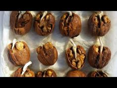 growing walnut from seeds Growing Fruit Trees, Growing Seeds, Growing Tree, Growing Plants, Fruit Plants, Fruit Garden, Home Vegetable Garden, Plantation, Food
