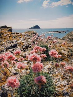 Beautiful landscape - take us there! Flowers, water and a view / beautiful nature photography Mother Earth, Mother Nature, Beautiful World, Beautiful Places, Wonderful World, Beautiful Beach, Beautiful Moments, All Nature, Pink Nature