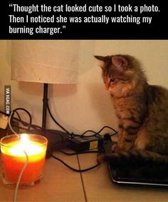 Some cats want to watch the world burn