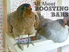 If you are planning to design a coop or roosting bars for your chicken, you might need some chicken roosting ideas. The chicken roosting is the spot where your chicken needs to perch when it's time to sleep. Chicken enjoy sleeping on the roosting bars. Urban Chicken Coop, Chicken Roost, Cheap Chicken Coops, Mobile Chicken Coop, Small Chicken Coops, Diy Chicken Coop Plans, Portable Chicken Coop, Chicken Coop Designs, Backyard Chicken Coops
